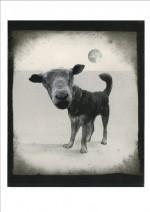 chien-mouton